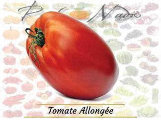Tomate allongée