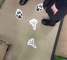 Whose Footprints???