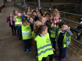 The Badgers and Hedgehogs Farm Adventure