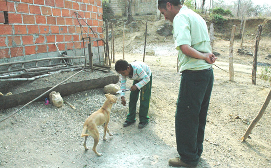 Disney's Animal Care Team Promotes Dog Training in Colombia