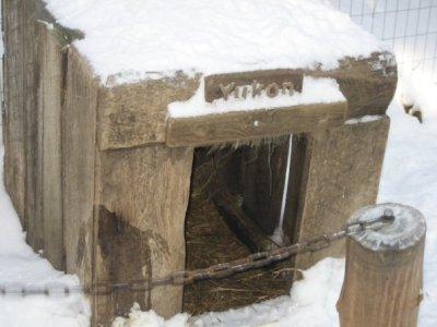Huskie shelter