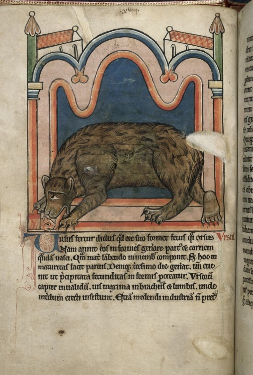 Anonymous, A mother bear licking her cub to give it its shape,  2nd quarter of the 13th century Southern England (Salisbury?), 310 x 230 mm. Harley 4751, f. 15v, detail, British Library