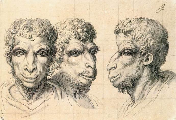 Tête physiognomonique inspirée par un chameau, vers 1670. Musée du Louvre.