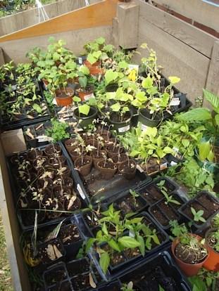 Cold Frame Plants