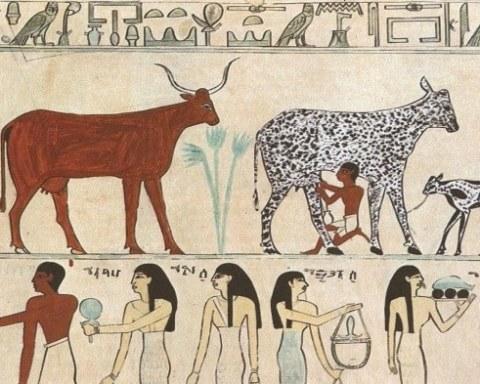 evcil hayvan hiyeroglif