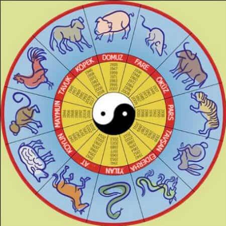 12 hayvan