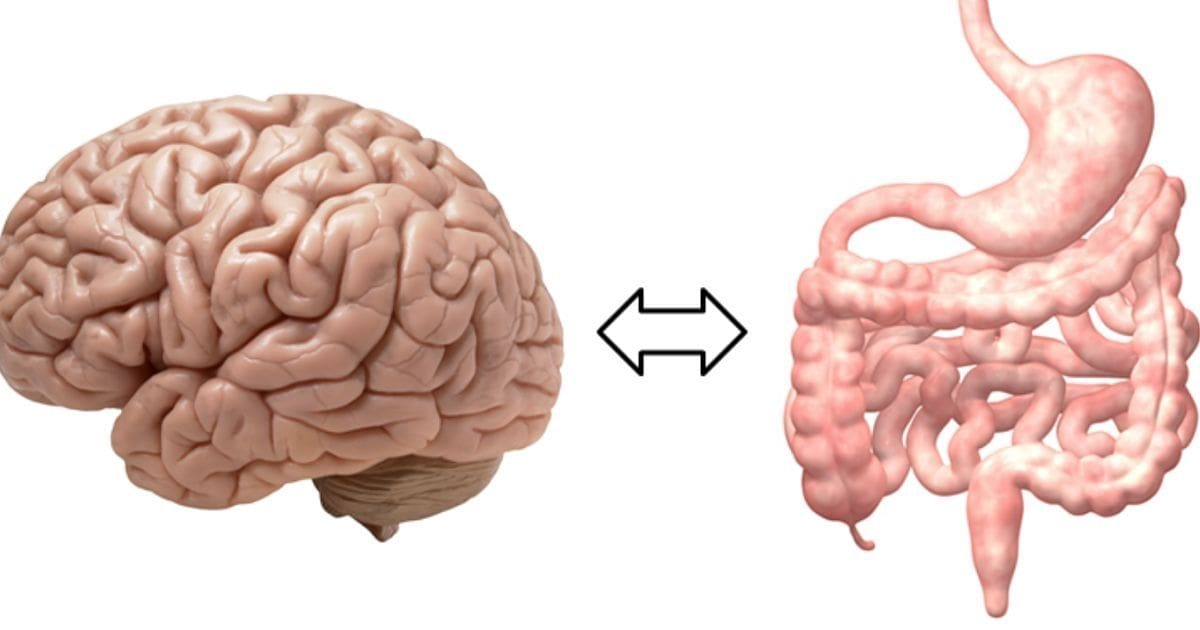 bağırsak-beyin ilişkisi