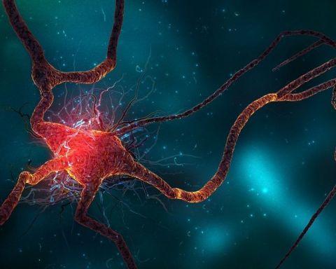 beyin travması göstergesi testi
