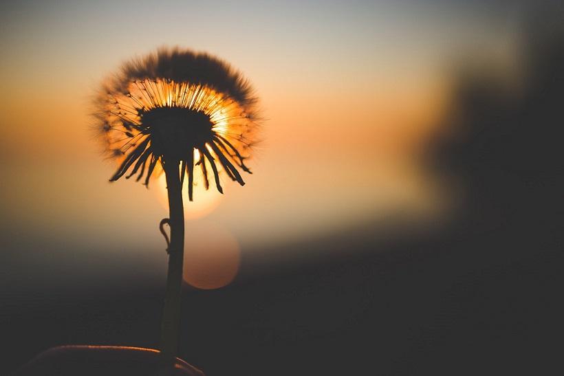 gün batımı ve çiçek