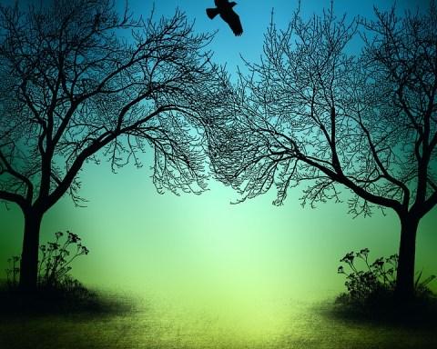 gece kuşlar ve ağaç