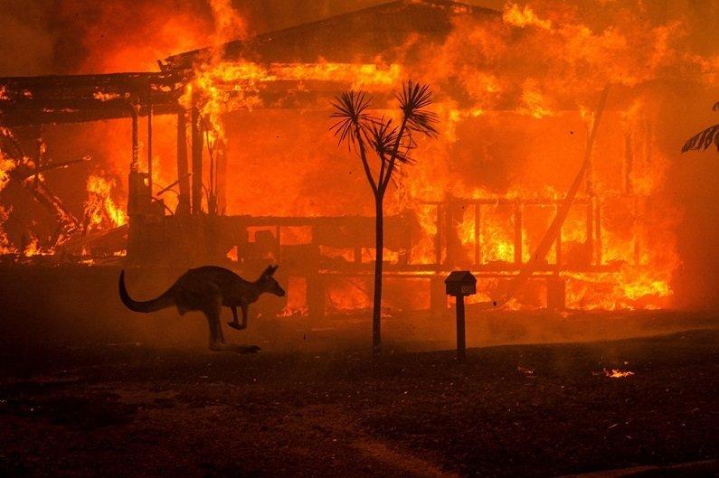 İklim Değişikliğinin Günümüze ve Geleceğimize Etkileri kanguru yangın