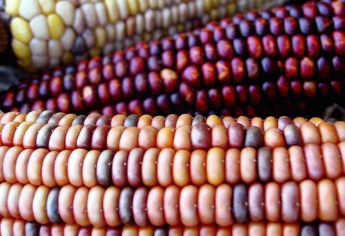 OGM un pericolo reale e tangibile anche per le generazioni future