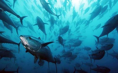 Pesca: M5S, Governo accolga nostre misure a sostegno imprese