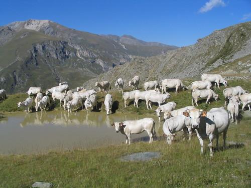 Stato – Regioni, Più fondi Pac per allevamenti privi di Ogm e antibiotici