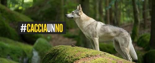 Un piano per uccidere il lupo, #CacciaunNO