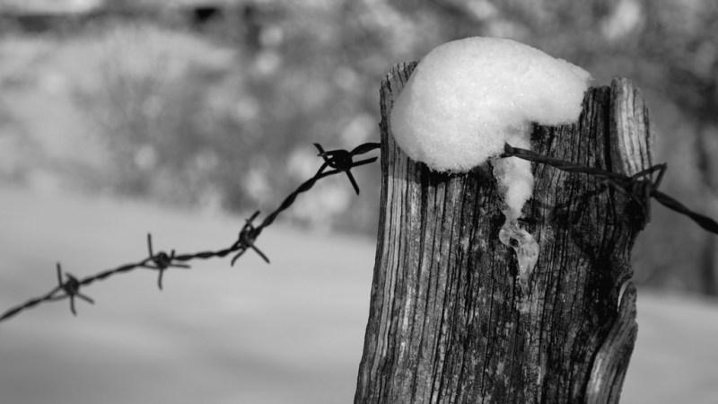Shoah: Cultura antidoto ad antisemitismo e intolleranza