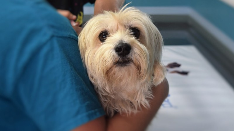 Salute: Con ok a mozione primo passo per salute animali