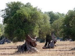 Agroalimentare: Sosteniamo filiera olivicola contro crisi prezzi