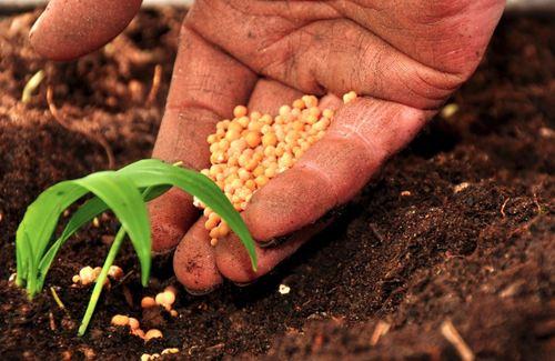 Manovra, sostegno concreto per incentivare e sostenere il mondo agricolo