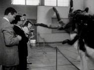 Earth vs the Spider (1958) - pic 5