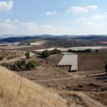 Виноградники в долине Лахиша, вид с Тель Лахиша
