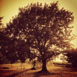 Quest'albero non dovrebbe mancare nel mio giardino