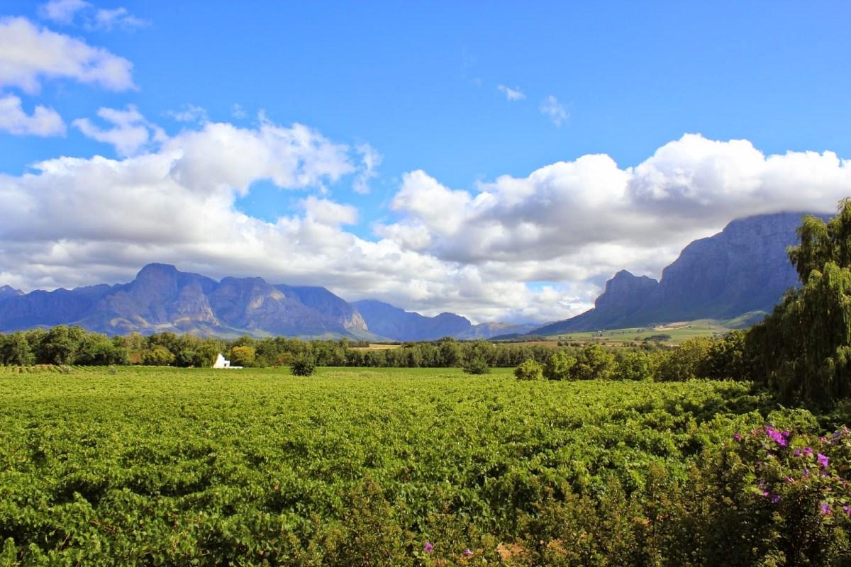 Sudafrica: il Paese dei vini Arcobaleno.