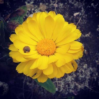 fiori-e-fotografia-paroleombra