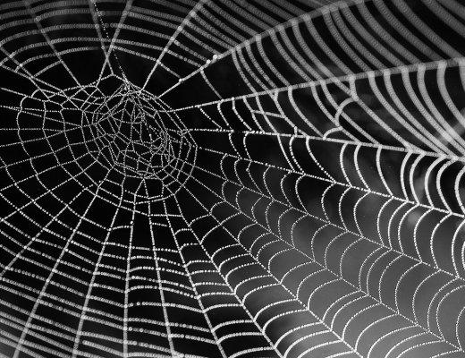 Informazione e cultura: come sarà il web tra 10 anni? (immagine via Pixabay