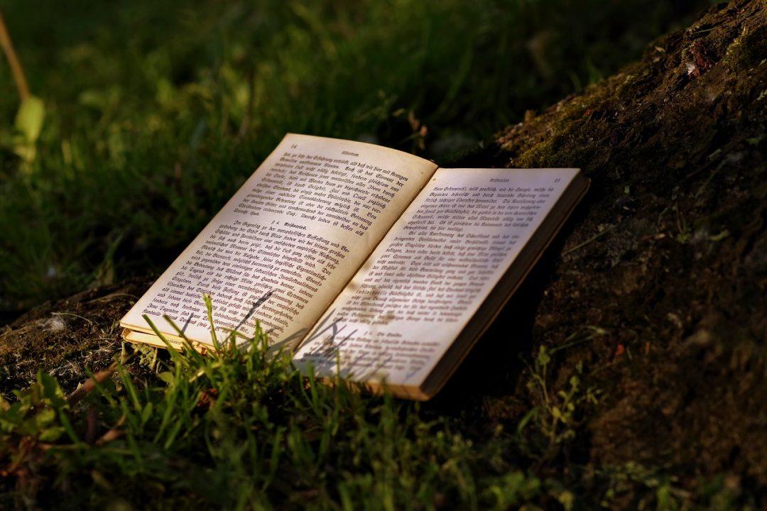 curriculum-del-lettore-di-giugno-e-semi-ferie-di-un-blog-di-libri