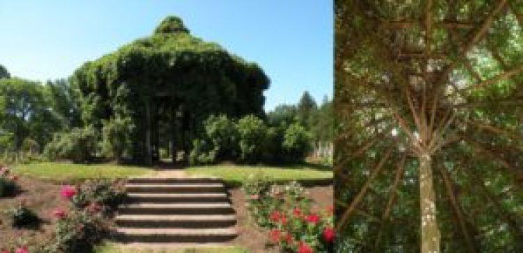 Choupana ao centro do Jardim das Rosas do Elizabeth Park. Foto: Roberto Carvalho de Magalhães.