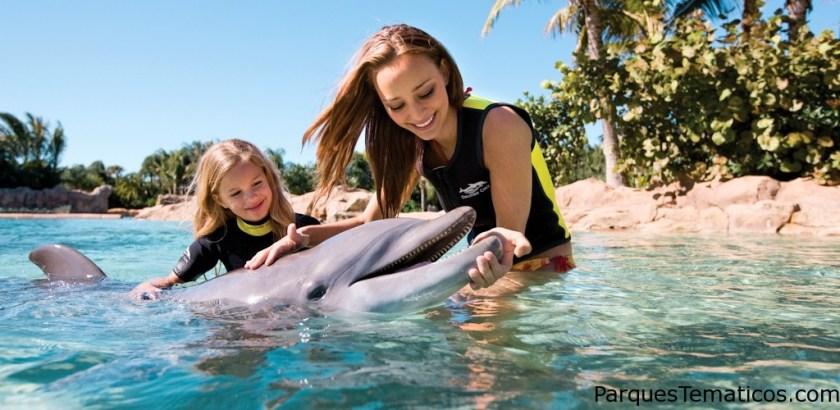 Disfrute de una experiencia única en la vida al poder nadar entre delfines en un hábitat creado por SeaWorld Orlando y conozca más sobre la vida marina.