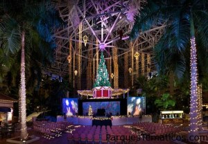 Christmas Live Stage Shows