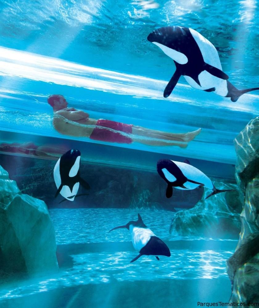 Aquatica (Parque Acuático de Seaworld's)   Orlando, Florida