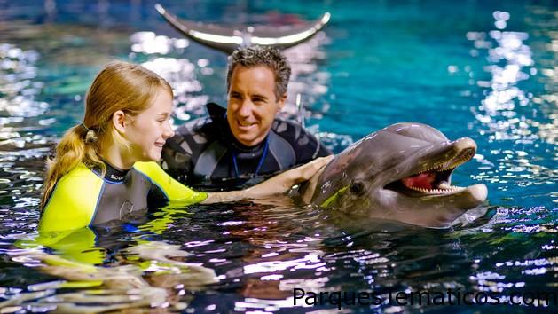 Nadar con delfines en Epcot
