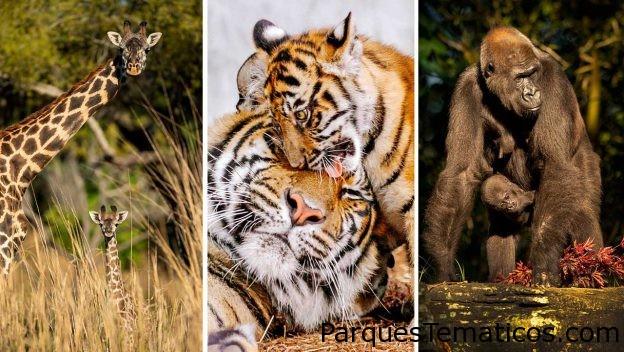 Aprenda más sobre sus animales favoritos majestuosos de Disney
