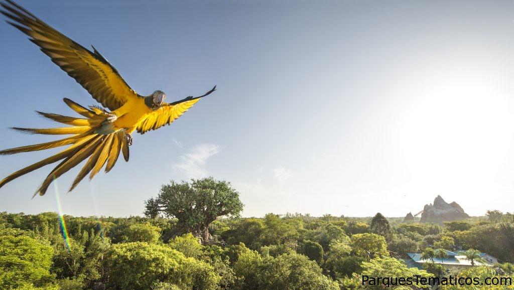 Festejando el Día de la Tierra, imágenes increíbles de un Guacamayo en Disney's Animal Kingdom