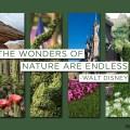 Echa un vistazo a los espectaculares colores de la primavera en los parques de Disney de todo el mundo