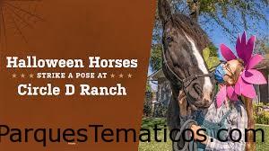 Los caballos de Halloween hacen una pose en Circle D Ranch