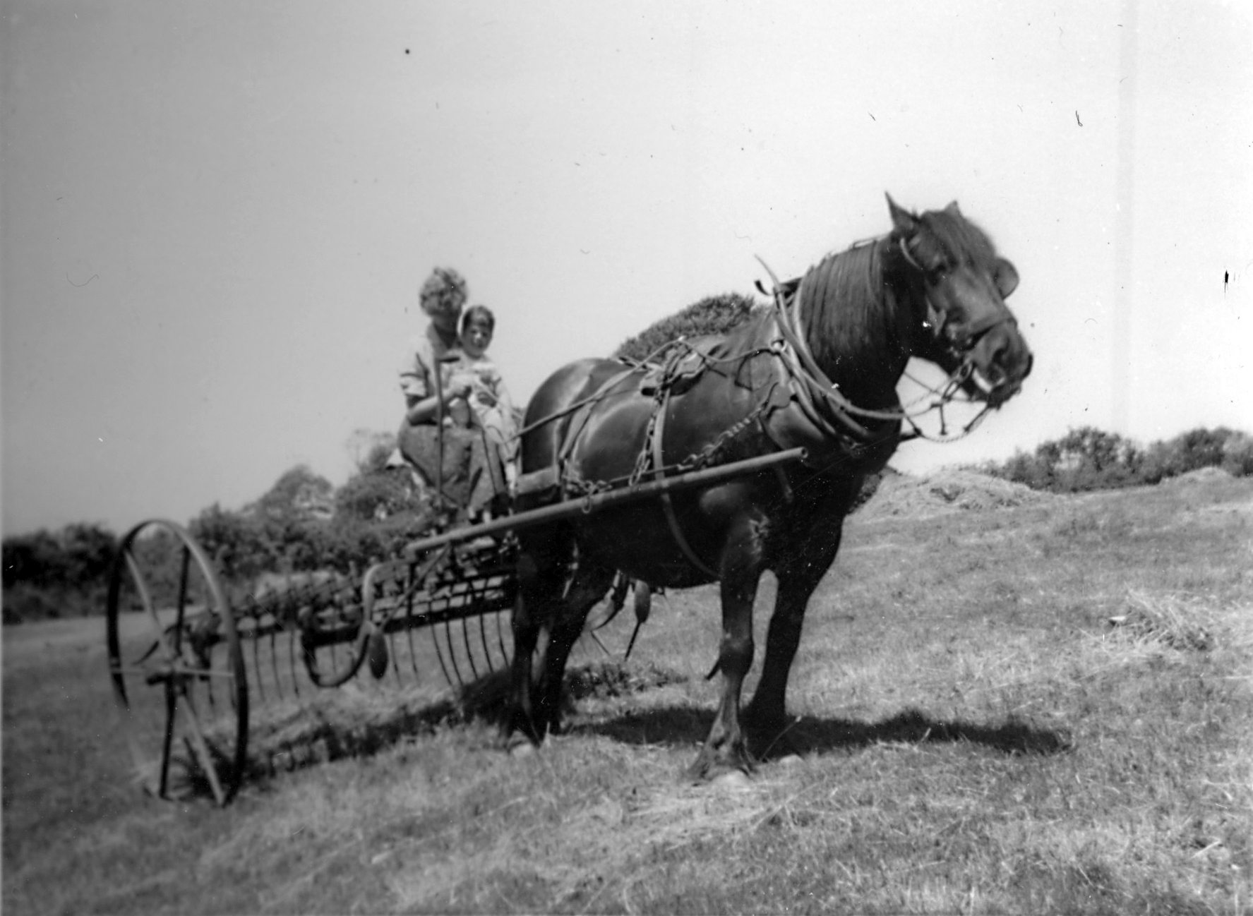 Horse and rake 1959 - kind permission of Emma Tucker