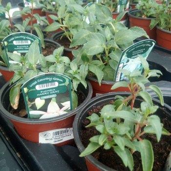 Summer Patio Plants