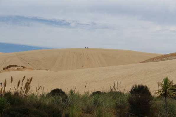 Te Paki Dunes, They are quite large