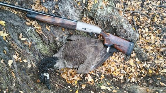 Beretta A400 Action doing what it does best