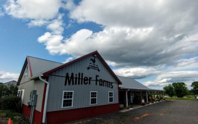 Fun, Cheap, and Easy Ideas to Do With Your Kids Today- Miller Farms – Spotsylvania, VA