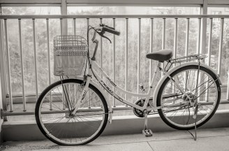 MM2-20 Parrot Exposed - bike balcony