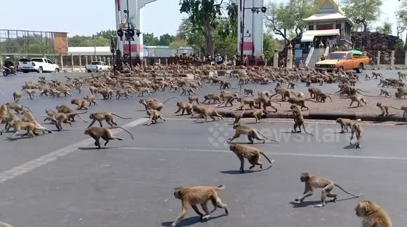 Monkeys attack medical official, steal coronavirus blood samples
