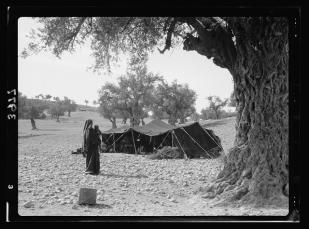 Bedouin tent of the gypsy type near Beit Jibrin