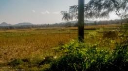 Pai field