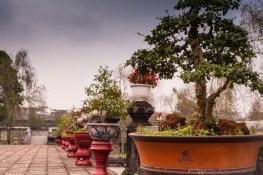 Imperial bonsai - Hue