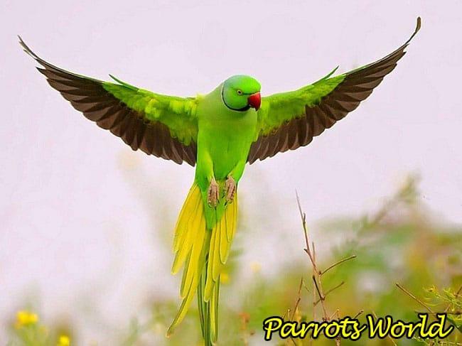 Halskette Papagei